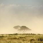 Sandstorm Amboseli