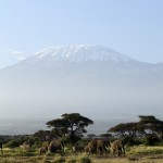 Kilimanjaro with elephants