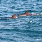 Dolphins at Wasini Island
